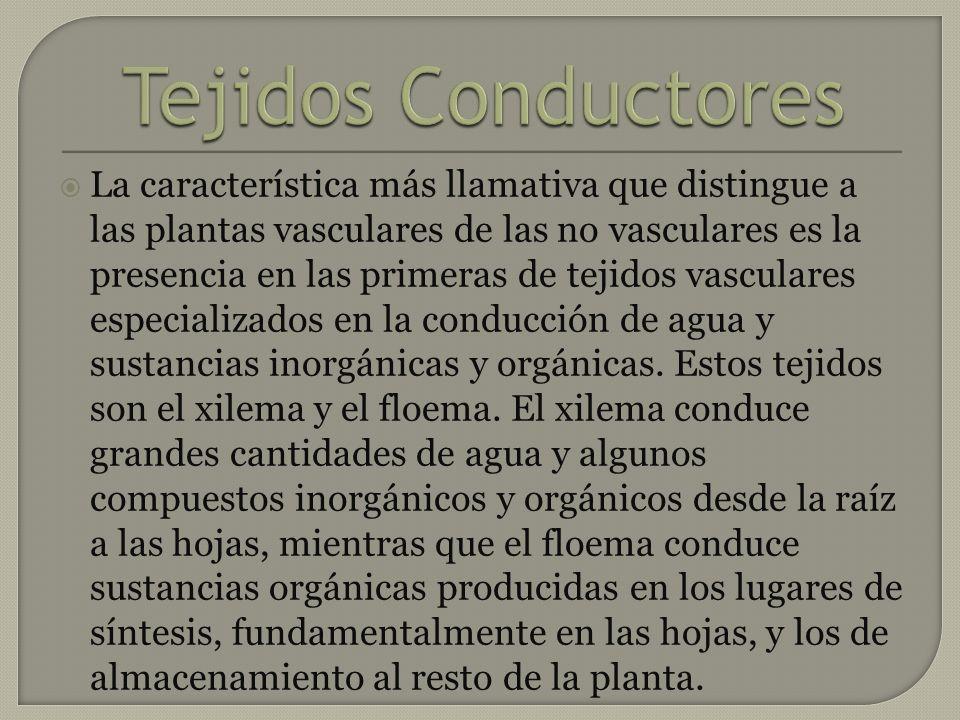 Tejidos Conductores