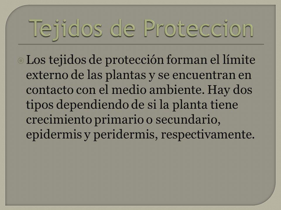 Tejidos de Proteccion