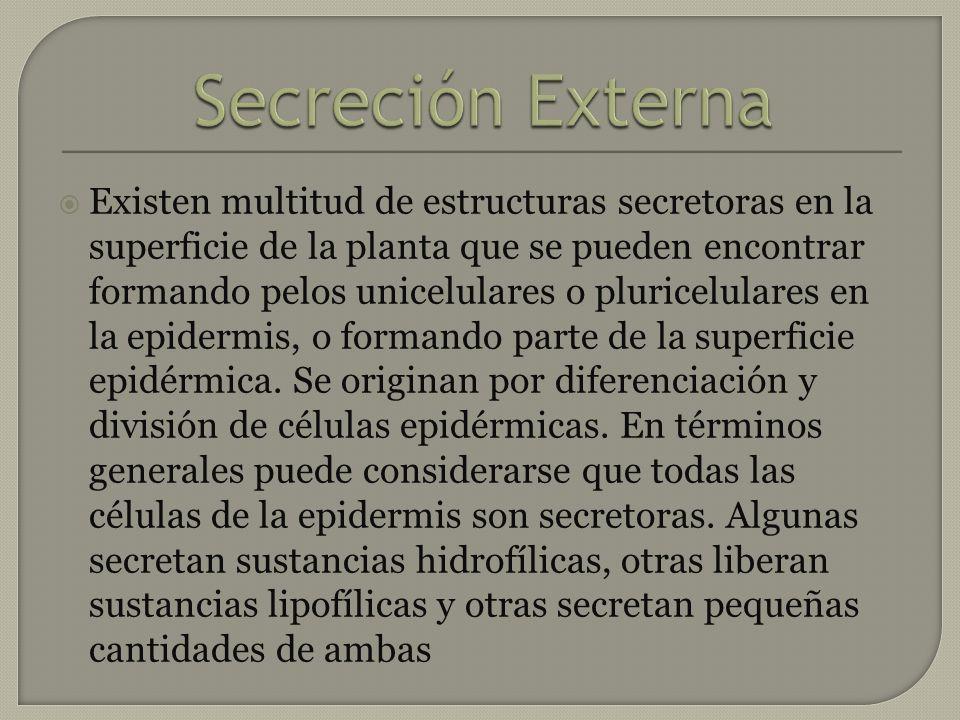 Secreción Externa