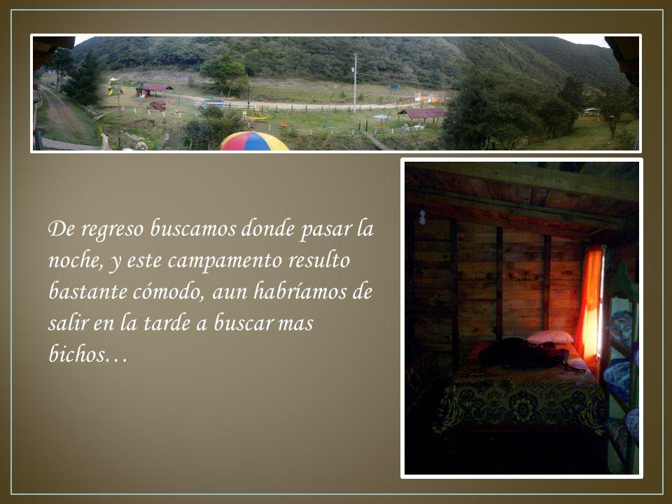 De regreso buscamos donde pasar la noche, y este campamento resulto bastante cómodo, aun habríamos de salir en la tarde a buscar mas bichos…