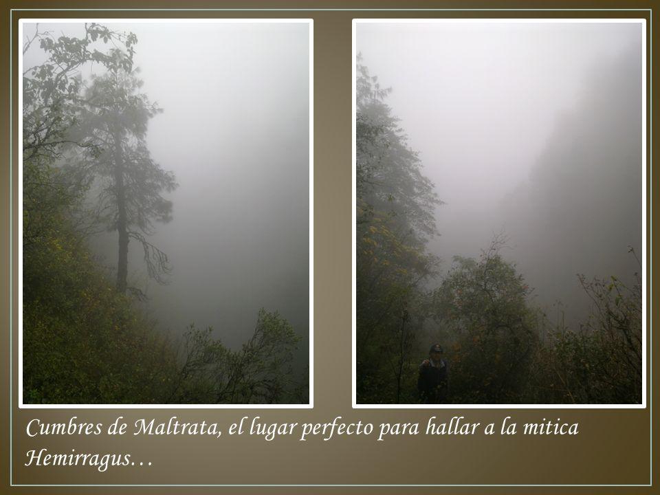 Cumbres de Maltrata, el lugar perfecto para hallar a la mitica Hemirragus…