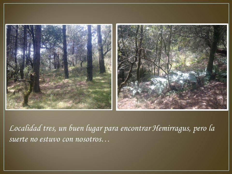 Localidad tres, un buen lugar para encontrar Hemirragus, pero la suerte no estuvo con nosotros…