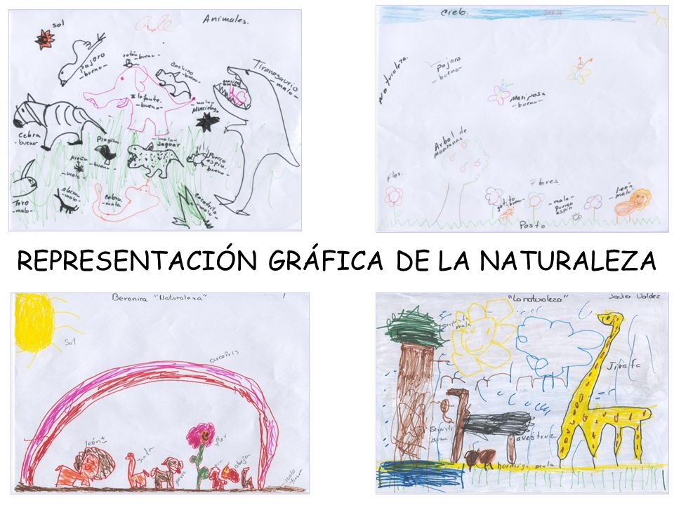 REPRESENTACIÓN GRÁFICA DE LA NATURALEZA