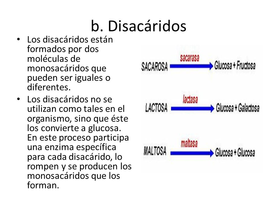 b. Disacáridos Los disacáridos están formados por dos moléculas de monosacáridos que pueden ser iguales o diferentes.