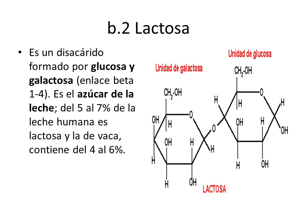 b.2 Lactosa