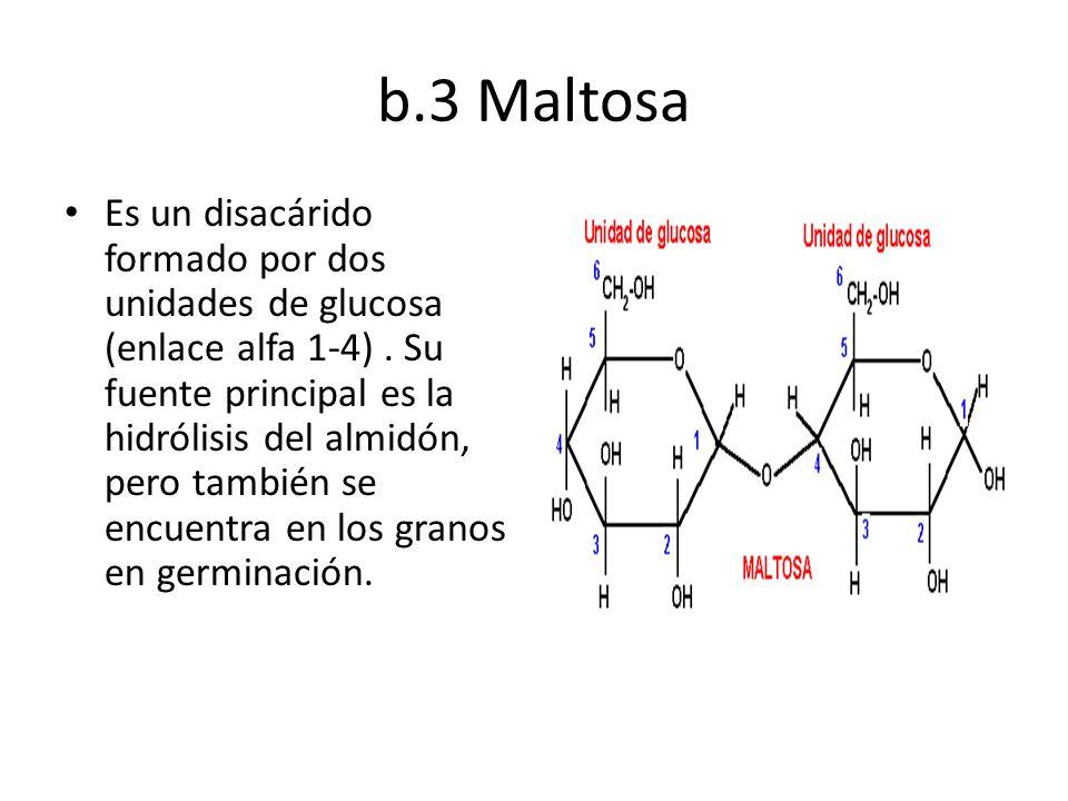 b.3 Maltosa