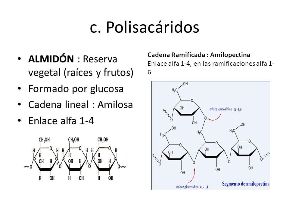 c. Polisacáridos ALMIDÓN : Reserva vegetal (raíces y frutos)