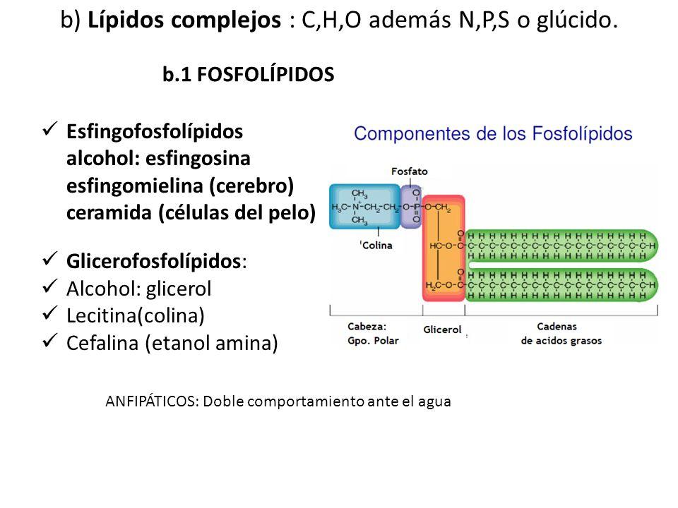 b) Lípidos complejos : C,H,O además N,P,S o glúcido.