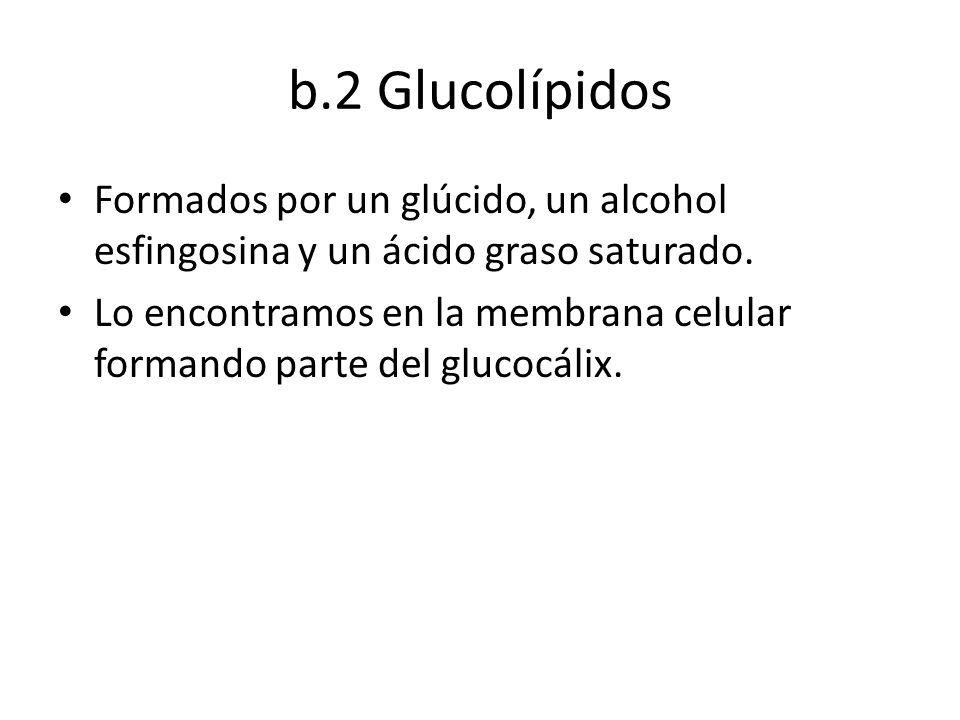 b.2 Glucolípidos Formados por un glúcido, un alcohol esfingosina y un ácido graso saturado.