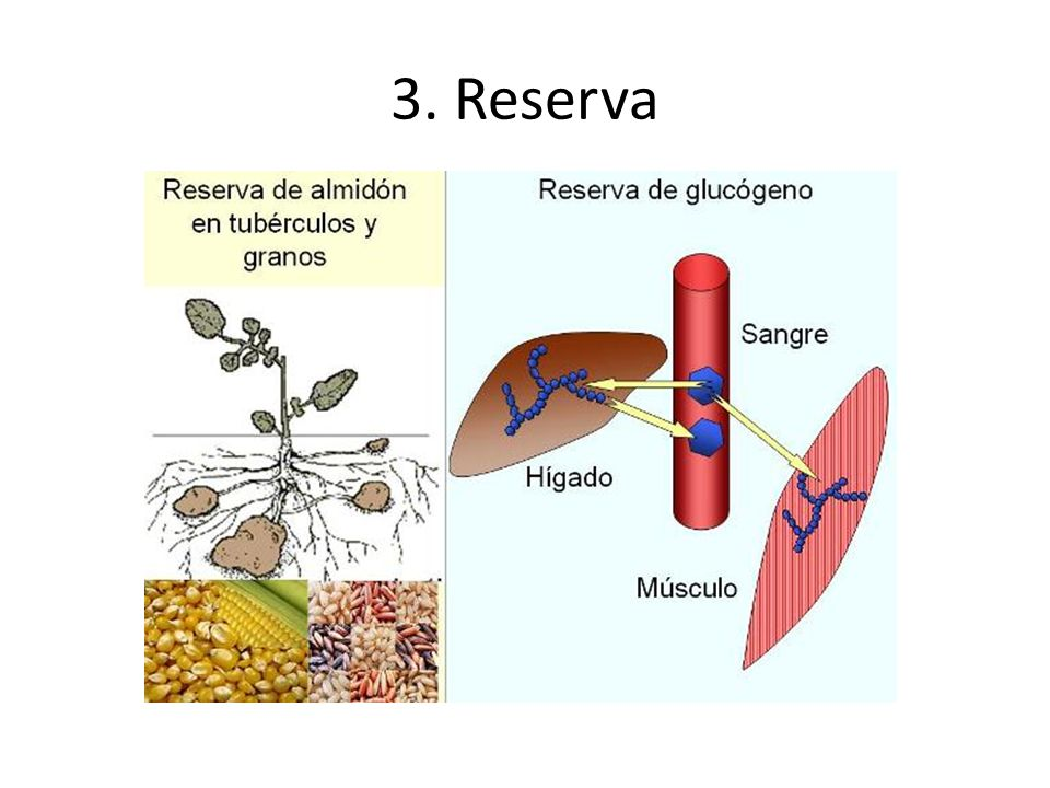 3. Reserva