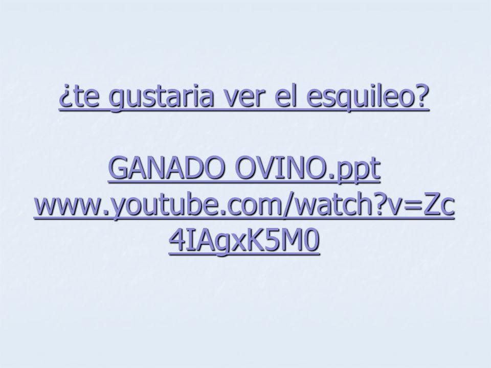 ¿te gustaria ver el esquileo GANADO OVINO.ppt www.youtube.com/watch v=Zc4IAgxK5M0