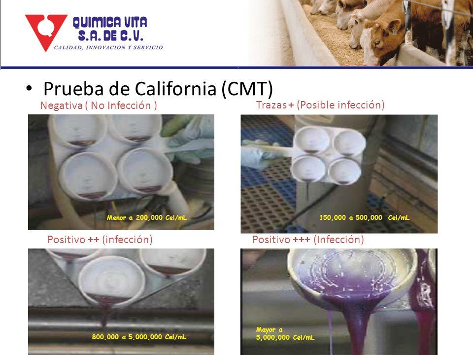Prueba de California (CMT)