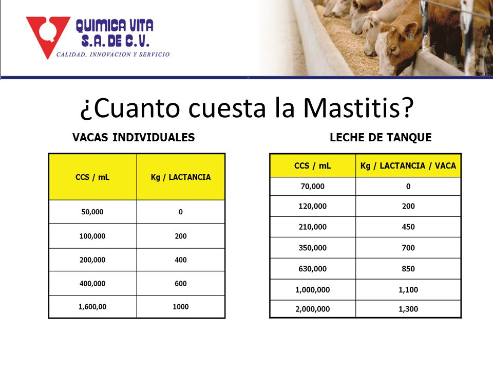 ¿Cuanto cuesta la Mastitis