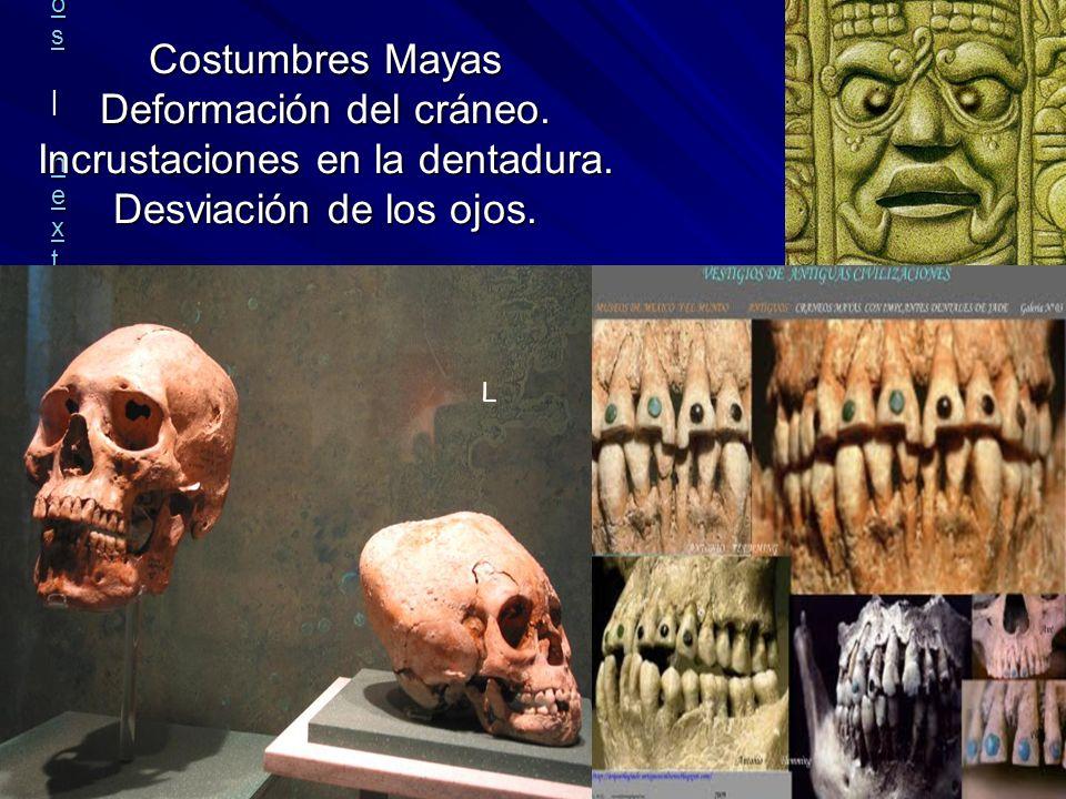 Rafael Moctezuma | all galleries >> Museo Nacional de Antropologia e Historia, Mexico DF > CRANEO NORMAL Y UN CRANEO MAYA