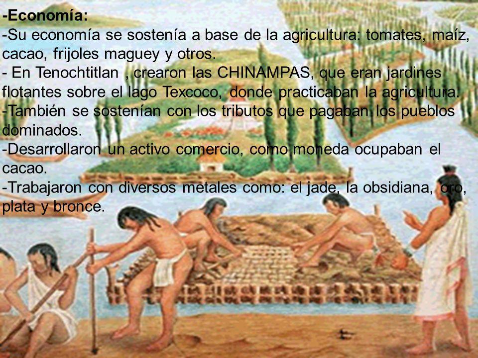 -Economía: -Su economía se sostenía a base de la agricultura: tomates, maíz, cacao, frijoles maguey y otros. - En Tenochtitlan , crearon las CHINAMPAS, que eran jardines flotantes sobre el lago Texcoco, donde practicaban la agricultura.