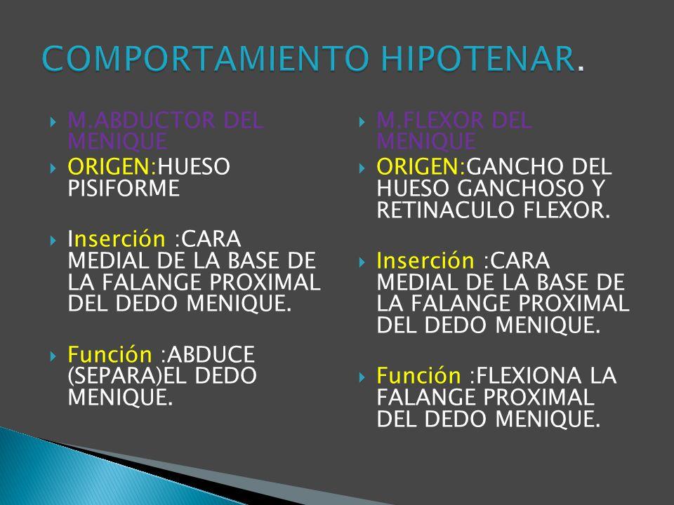 COMPORTAMIENTO HIPOTENAR.