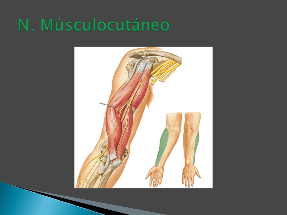 N. Músculocutáneo