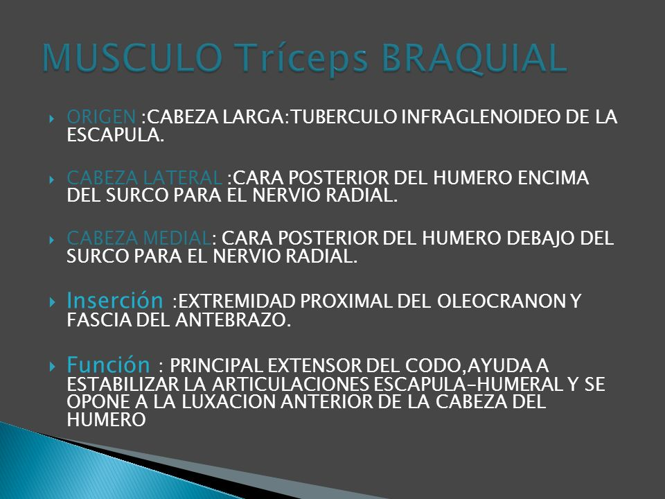 MUSCULO Tríceps BRAQUIAL