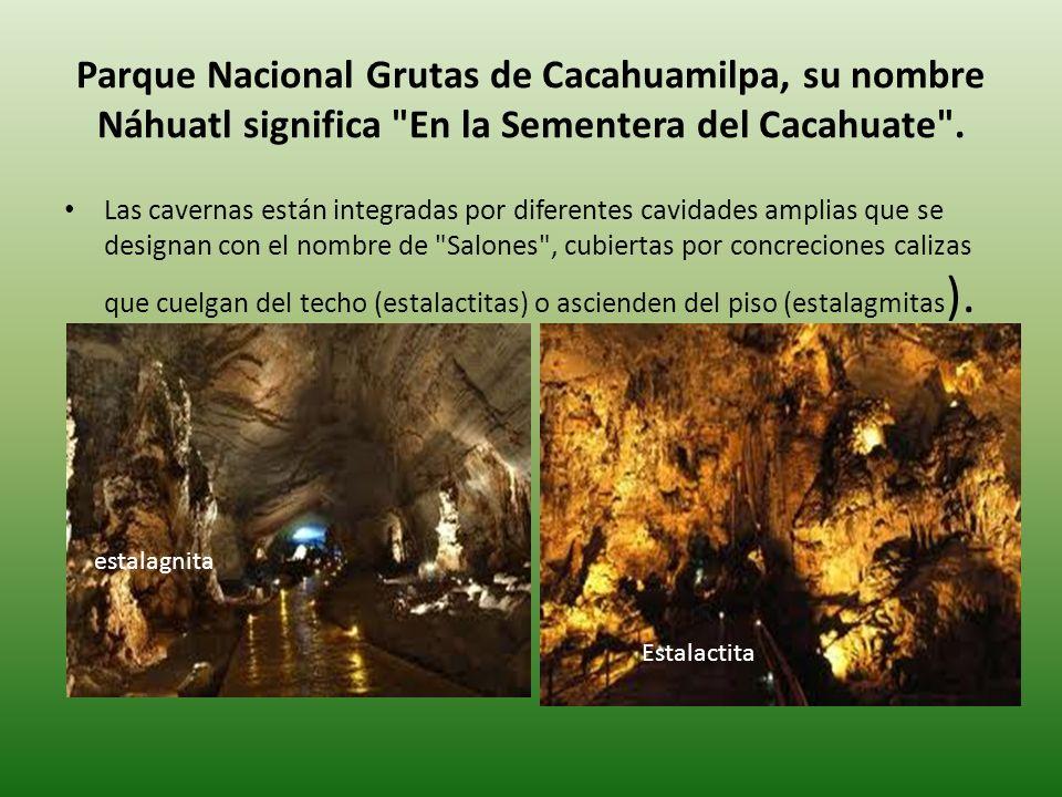 Parque Nacional Grutas de Cacahuamilpa, su nombre Náhuatl significa En la Sementera del Cacahuate .