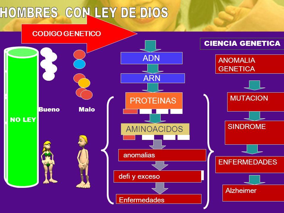 HOMBRES CON LEY DE DIOS ADN ARN PROTEINAS AMINOACIDOS CODIGO GENETICO