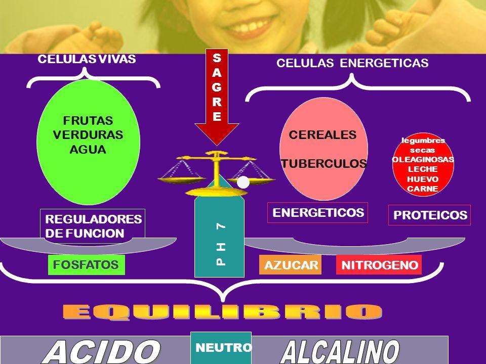 EQUILIBRIO ACIDO ALCALINO CELULAS VIVAS S A G R E CELULAS ENERGETICAS