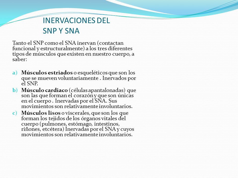 INERVACIONES DEL SNP Y SNA