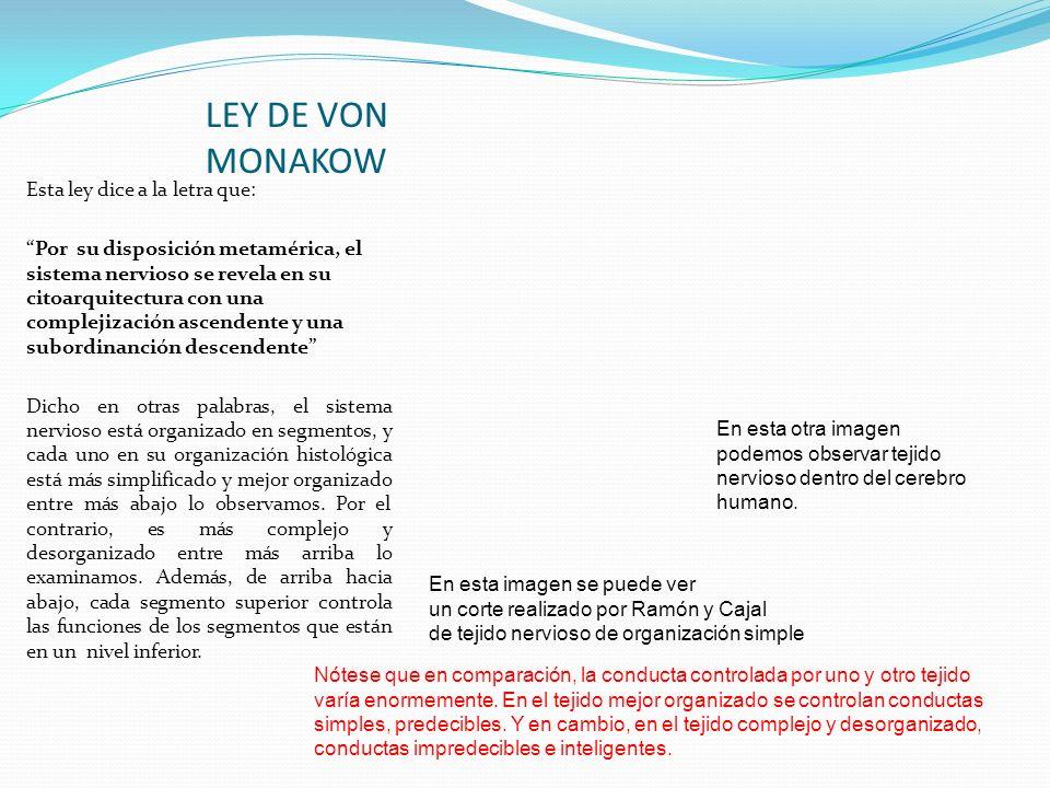 LEY DE VON MONAKOW Esta ley dice a la letra que: