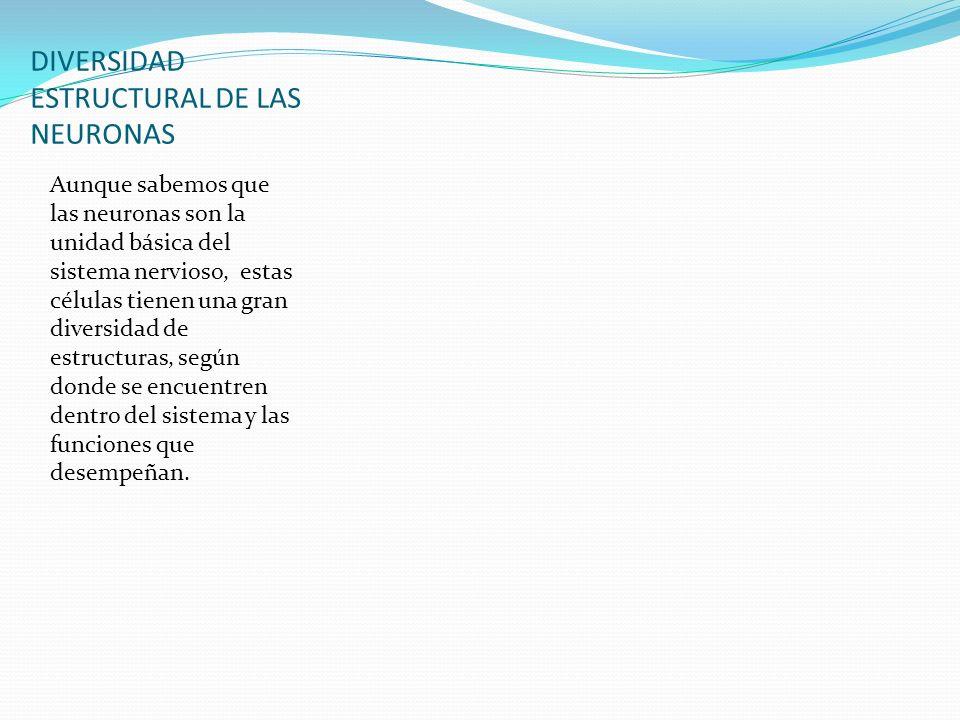 DIVERSIDAD ESTRUCTURAL DE LAS NEURONAS