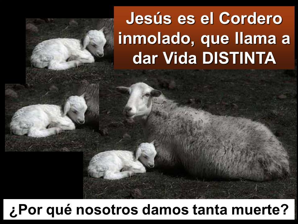 Jesús es el Cordero inmolado, que llama a dar Vida DISTINTA