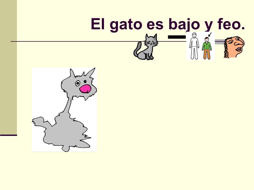 El gato es bajo y feo.