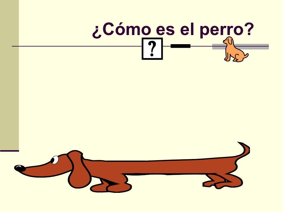 ¿Cómo es el perro