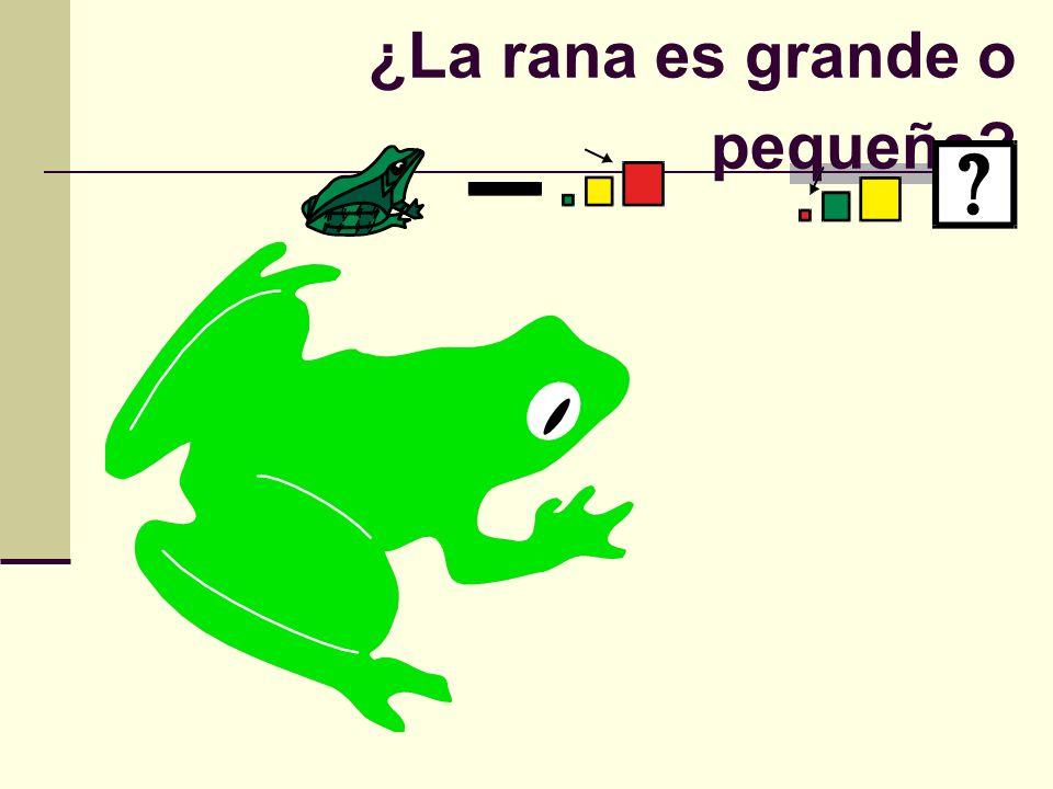 ¿La rana es grande o pequeña