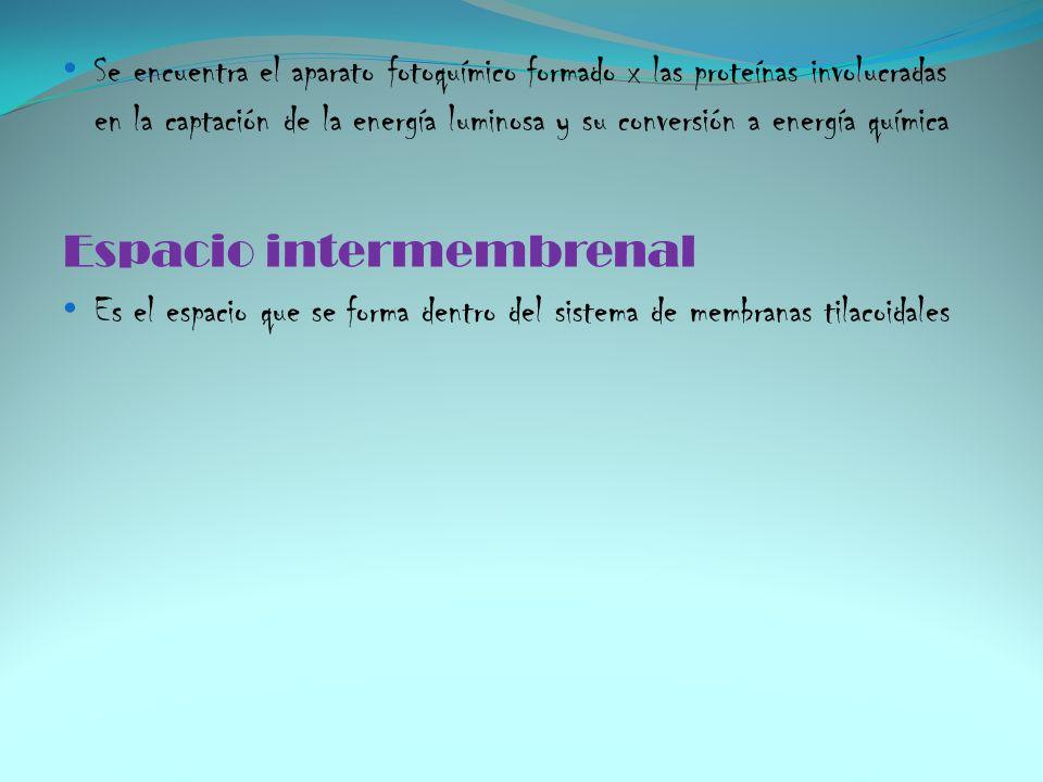 Espacio intermembrenal