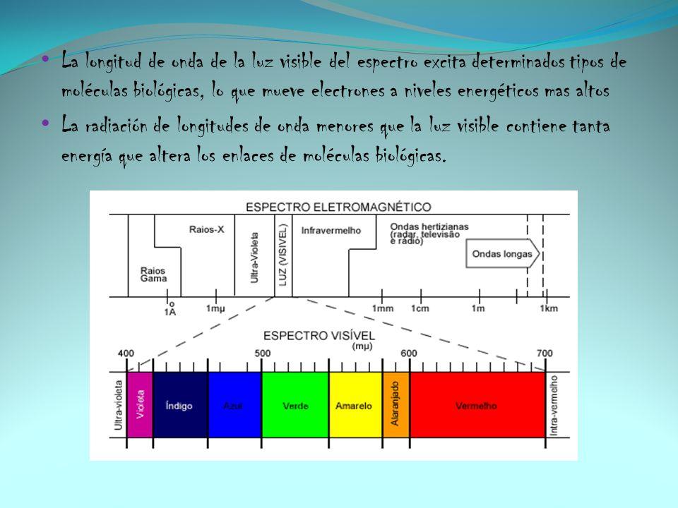 La longitud de onda de la luz visible del espectro excita determinados tipos de moléculas biológicas, lo que mueve electrones a niveles energéticos mas altos