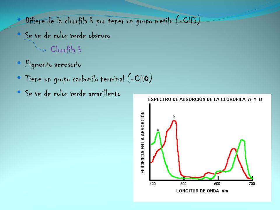 Difiere de la clorofila b por tener un grupo metilo (-CH3)