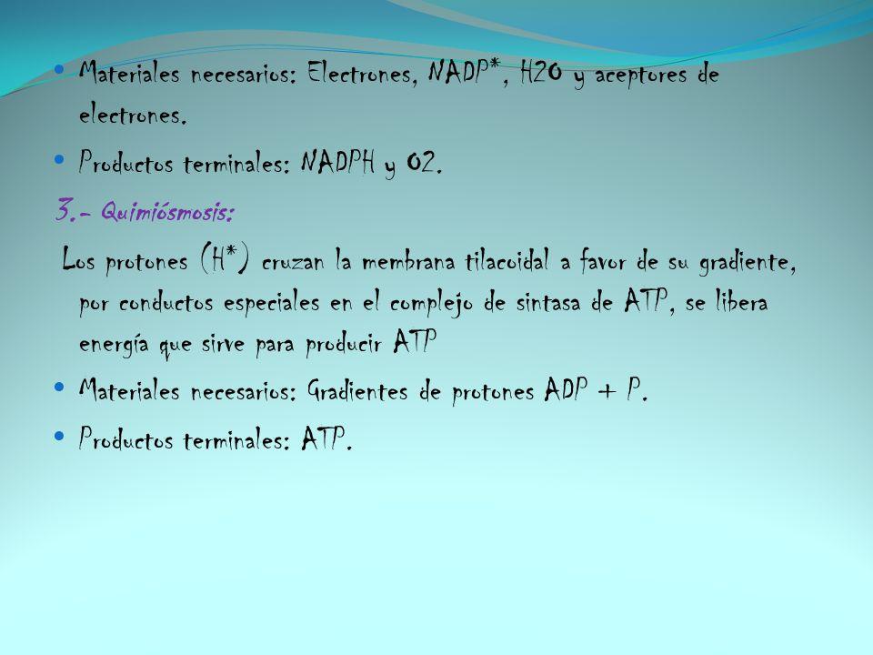 Materiales necesarios: Electrones, NADP