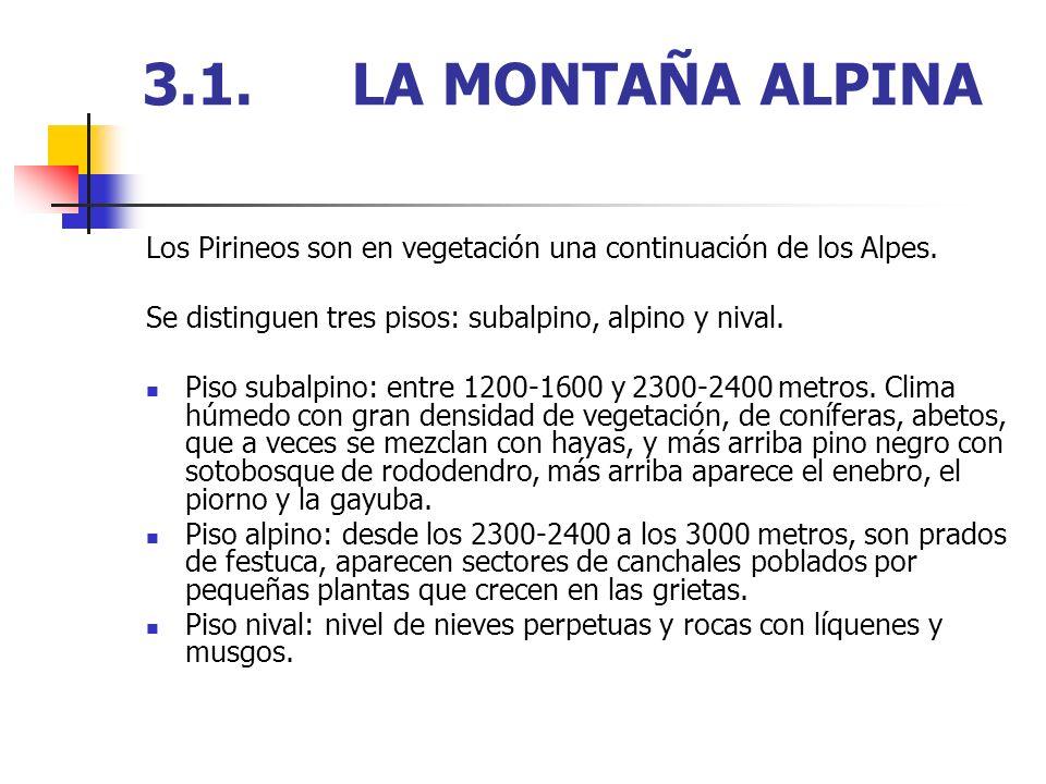 3.1. LA MONTAÑA ALPINA Los Pirineos son en vegetación una continuación de los Alpes. Se distinguen tres pisos: subalpino, alpino y nival.