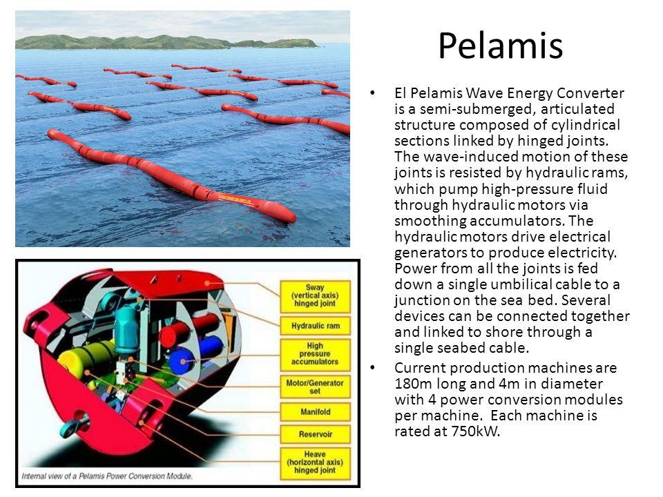 Pelamis