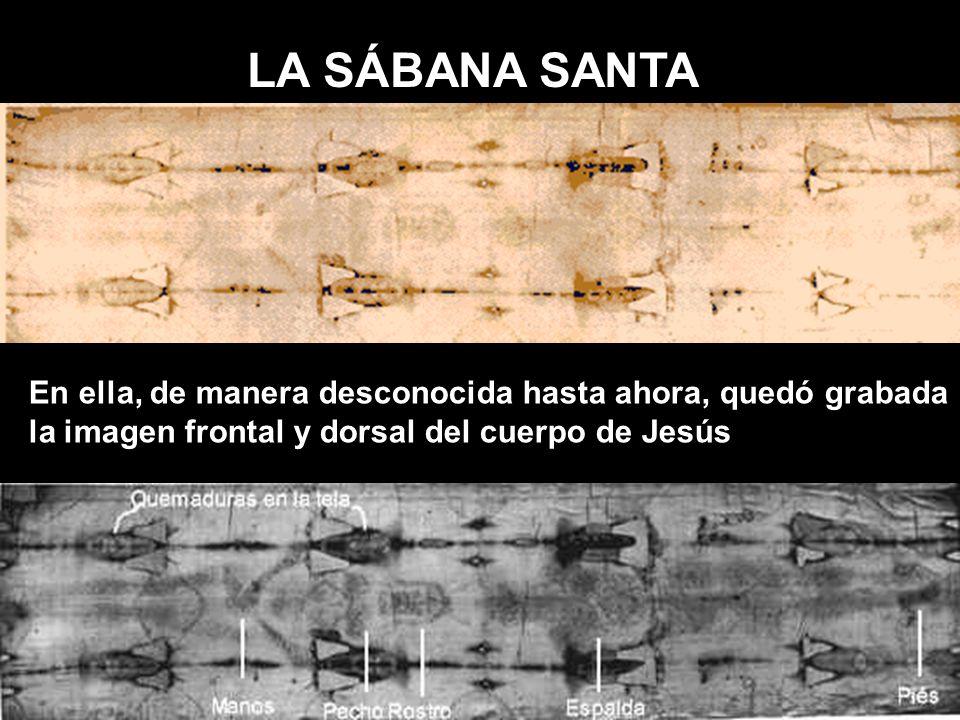 LA SÁBANA SANTA En ella, de manera desconocida hasta ahora, quedó grabada la imagen frontal y dorsal del cuerpo de Jesús.