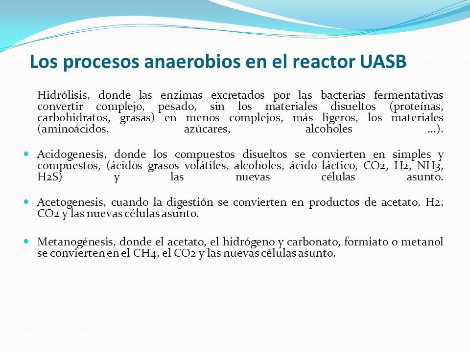 Los procesos anaerobios en el reactor UASB