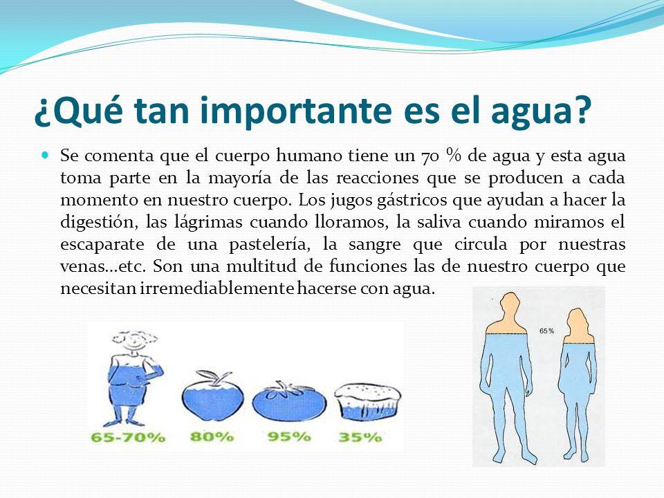¿Qué tan importante es el agua