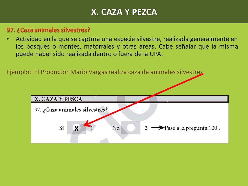 X. CAZA Y PEZCA X 97. ¿Caza animales silvestres