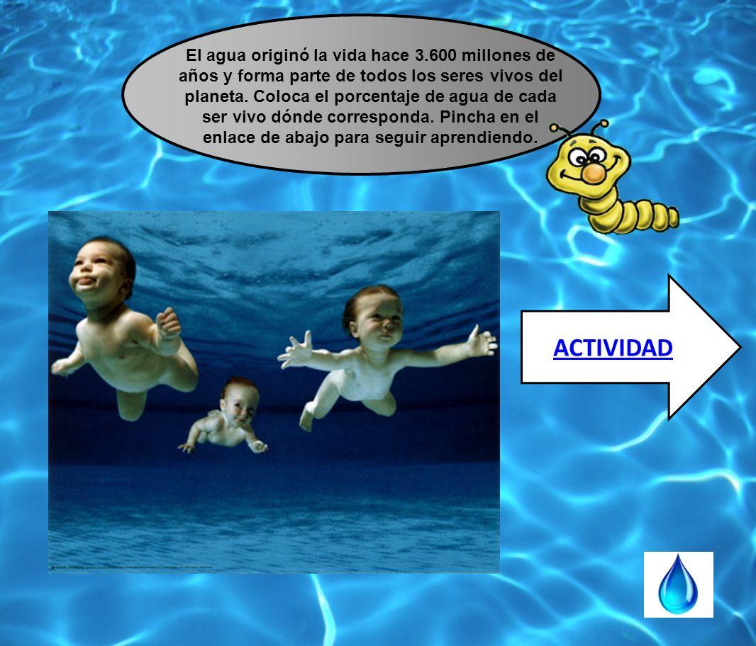 El agua originó la vida hace 3