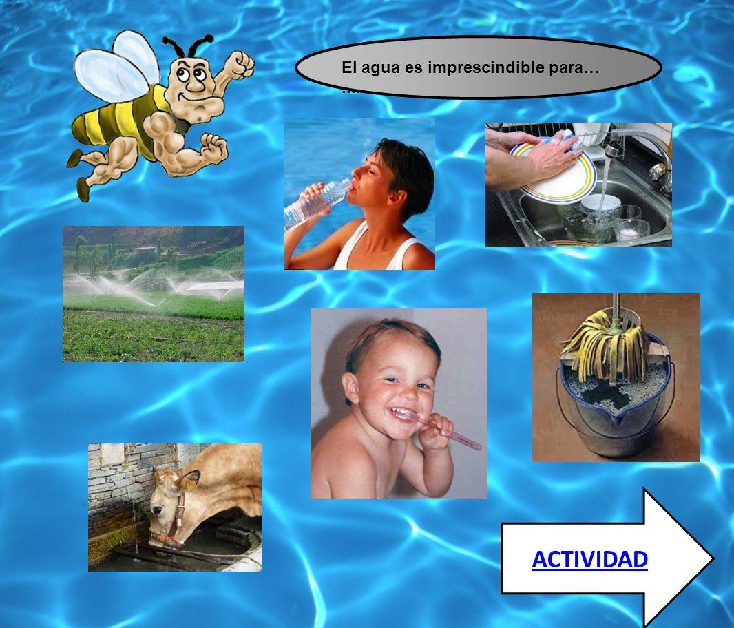 El agua es imprescindible para… ....