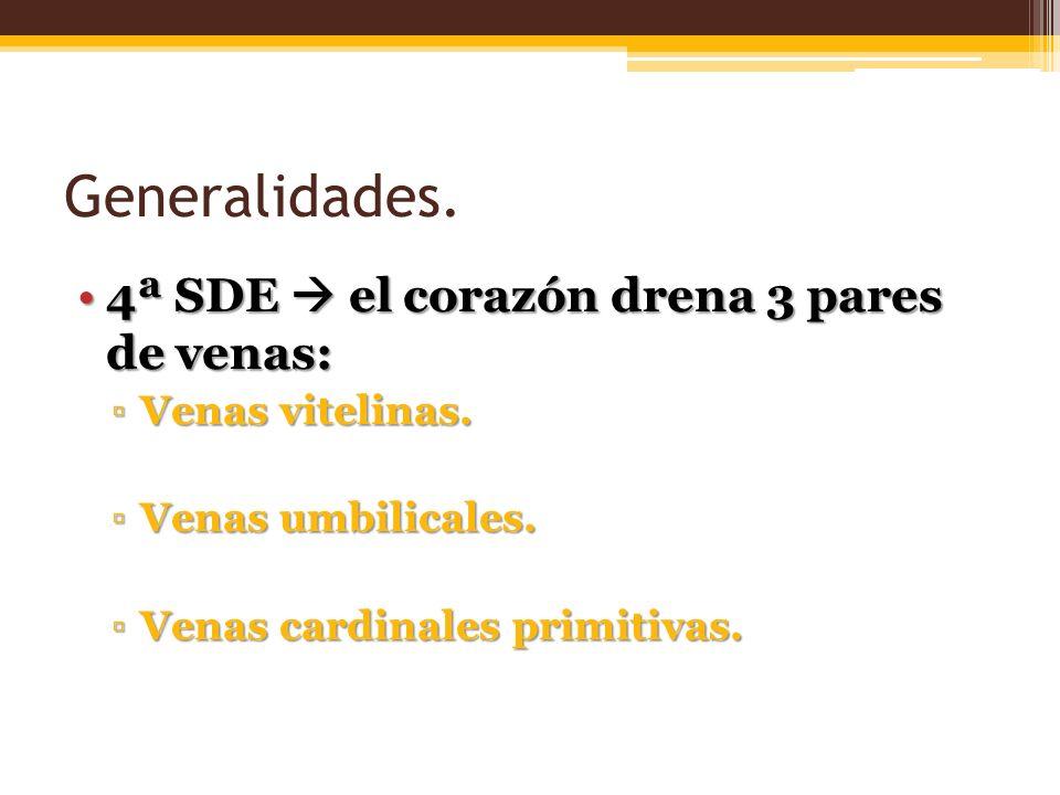 Generalidades. 4ª SDE  el corazón drena 3 pares de venas:
