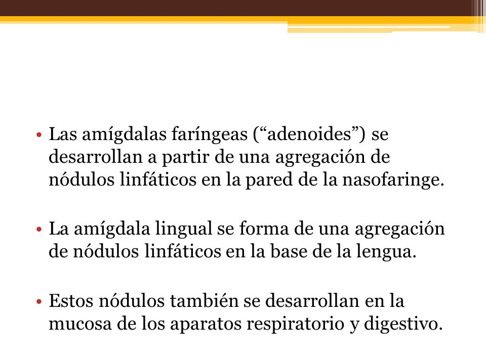 Las amígdalas faríngeas ( adenoides ) se desarrollan a partir de una agregación de nódulos linfáticos en la pared de la nasofaringe.