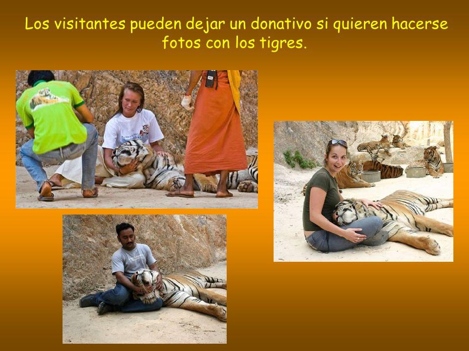 Los visitantes pueden dejar un donativo si quieren hacerse fotos con los tigres.