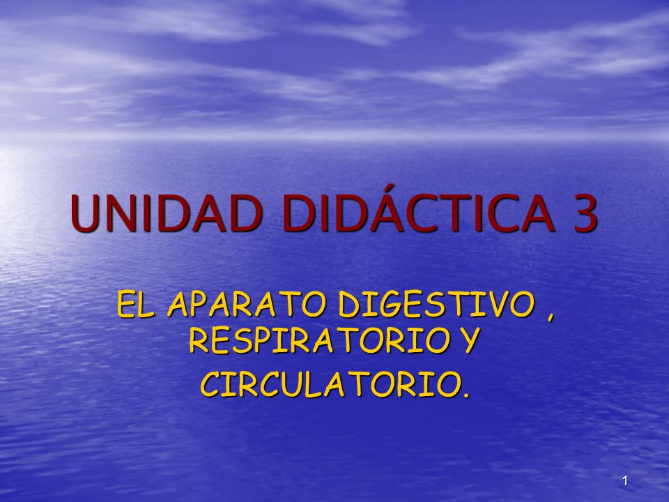 EL APARATO DIGESTIVO , RESPIRATORIO Y CIRCULATORIO.