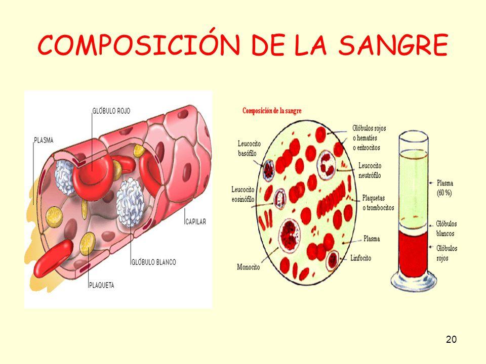 COMPOSICIÓN DE LA SANGRE