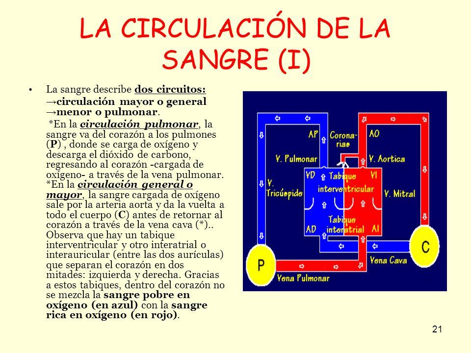 LA CIRCULACIÓN DE LA SANGRE (I)